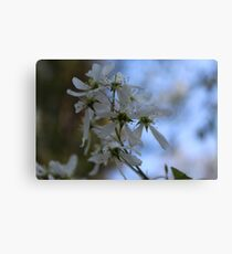 White Flower Close Up Canvas Print