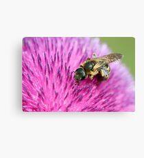 bee on flower close up spring season Canvas Print