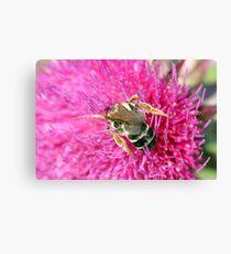 bee on flower macro spring season Canvas Print