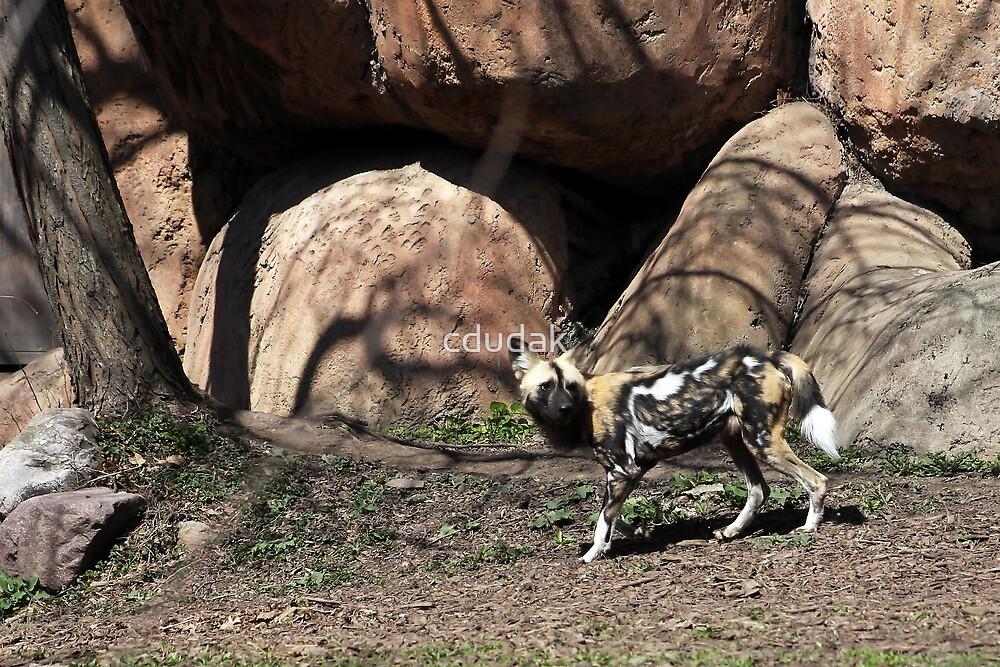 AFRICAN WILD DOG by cdudak