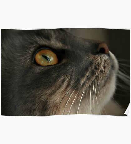 Look Up Cat Poster