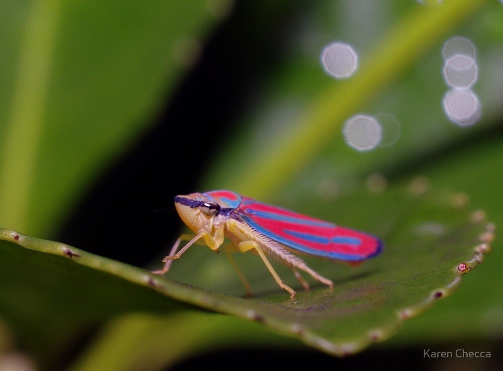 Color in Small Things by Karen Checca