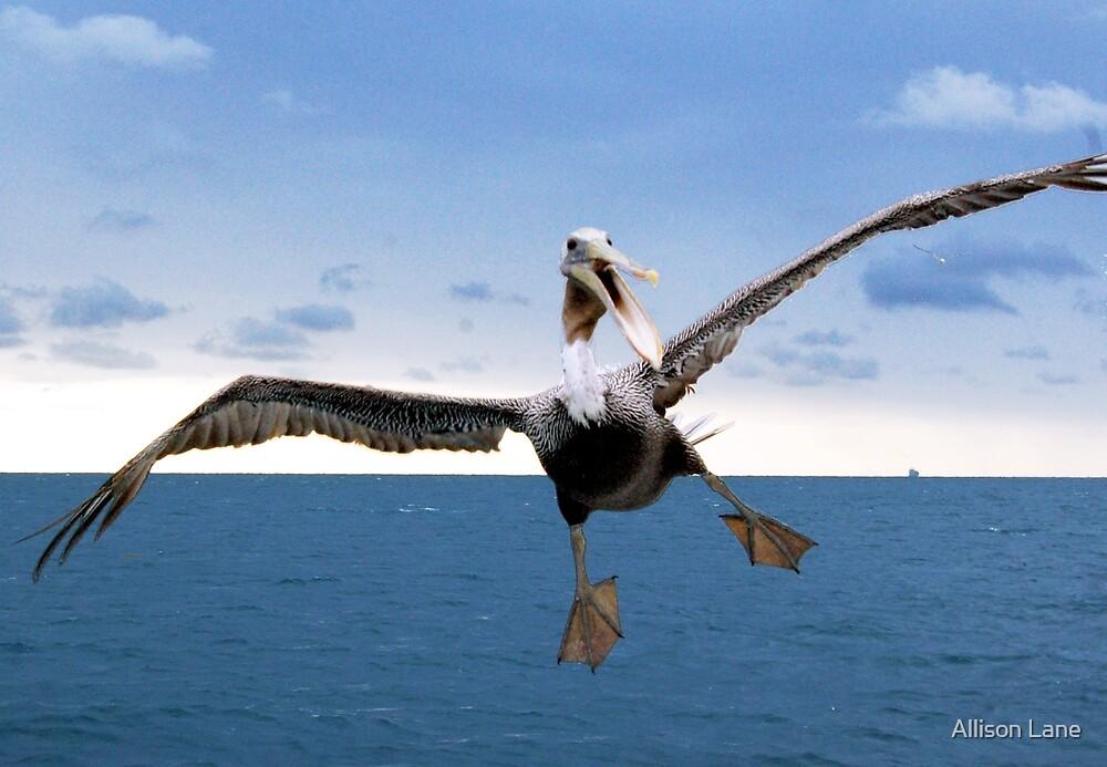Crazy Pelican by Allison Lane
