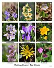Spring Flowers - Frühlingsblumen by Kasia-D