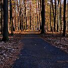 Letchworth State Park XI by PJS15204