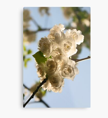 Blossoms I Metal Print
