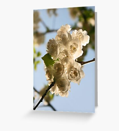 Blossoms I Greeting Card