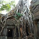 Strangler Fig Tree at Temple Ta Prohm, Cambodia by Bev Pascoe