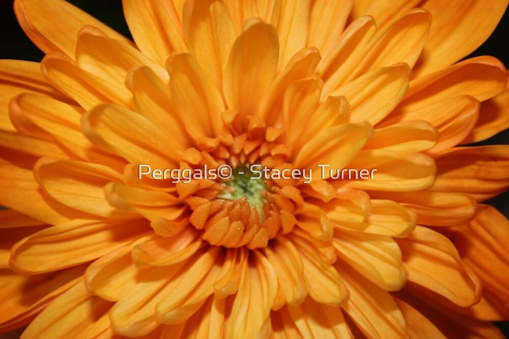 Bright orange by Perggals© - Stacey Turner
