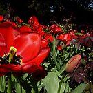 Flower garden by Perggals© - Stacey Turner