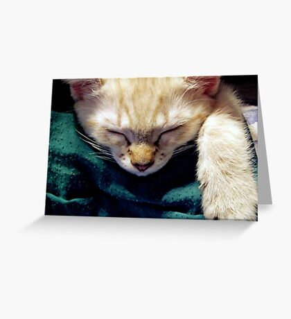 Catchin' A Nap Greeting Card