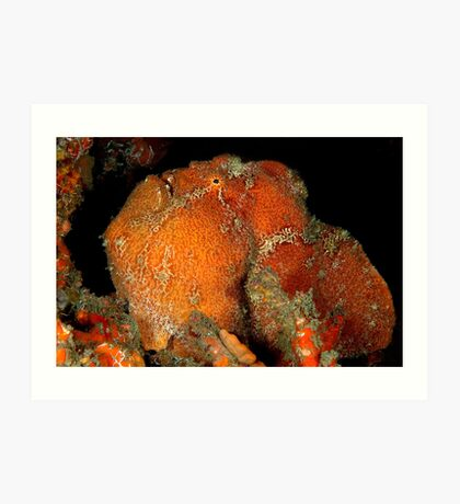 Giant Frogfish Art Print