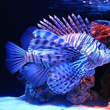 Lionfish by lauren-w
