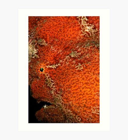 Giant Frogfish Portrait Art Print