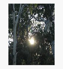 A GLIMMER OF LIGHT Photographic Print
