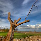 Lone Tree by Paul Thompson Photography