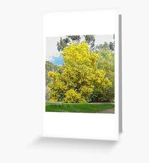 Golden wattle Greeting Card