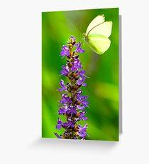 Pickerel Weed Flowers Greeting Card
