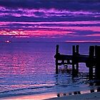 Penguin Island Sunset by Penny Smith