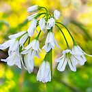 White woodland flora. by Dave Hare