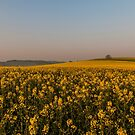 Fields of Yellow 2 by Jim Hellier