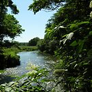 The River Test in summer at Houghton, Hampshire, southern England by Philip Mitchell