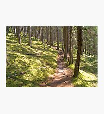 Forest Walk Photographic Print