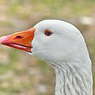 GOOSE IN COLOUR by relayer51