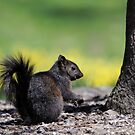 SQUIRREL by mc27