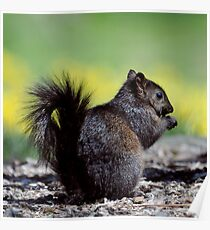 SQUIRREL II Poster