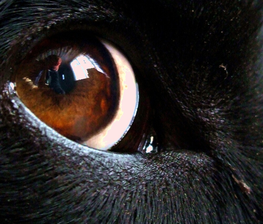An Eye For My Master by Leo  Head
