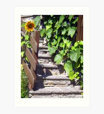 Sunflower and Grapes in the Sun Art Print