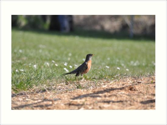 A surprising social robin by TheKoopaBros