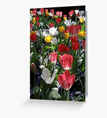 Tulips Dance in Morning Light Greeting Card