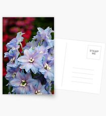 Purple Flowers Postcards