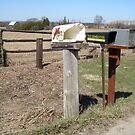 Ok ~ Half a Mail Box is better than a Crushed one.... by Larry Llewellyn