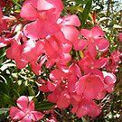 Pink Oleanders by Shulie1