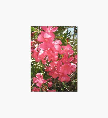 Pink Oleanders Art Board