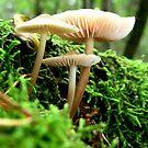 Little Funghi by ienemien