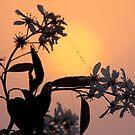 Blossom at Dawn by Jo Nijenhuis