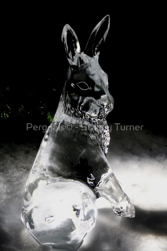 ice hare by Perggals© - Stacey Turner