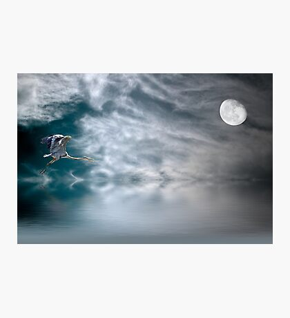 Heron and the Moon Photographic Print