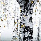 Birch Tree 1 by Mareike Böhmer