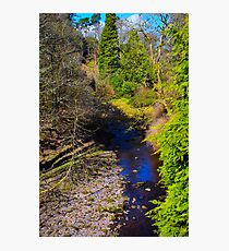 Peaceful woodland  Photographic Print