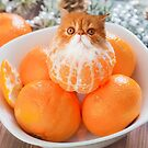 Tangerine Cat by Cats In Food