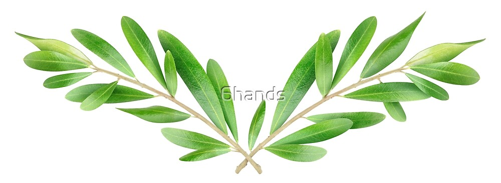 Two olive branches by 6hands