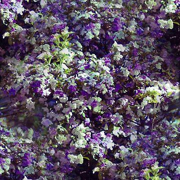Flowers by GeorgeSears