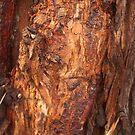 Living bark by Ruth Varenica