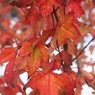 Autumn leaves 2 by Ruth Varenica