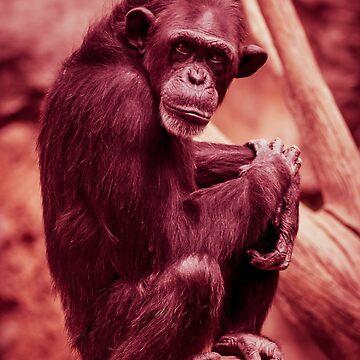 Chimpanzee by GeorgeSears